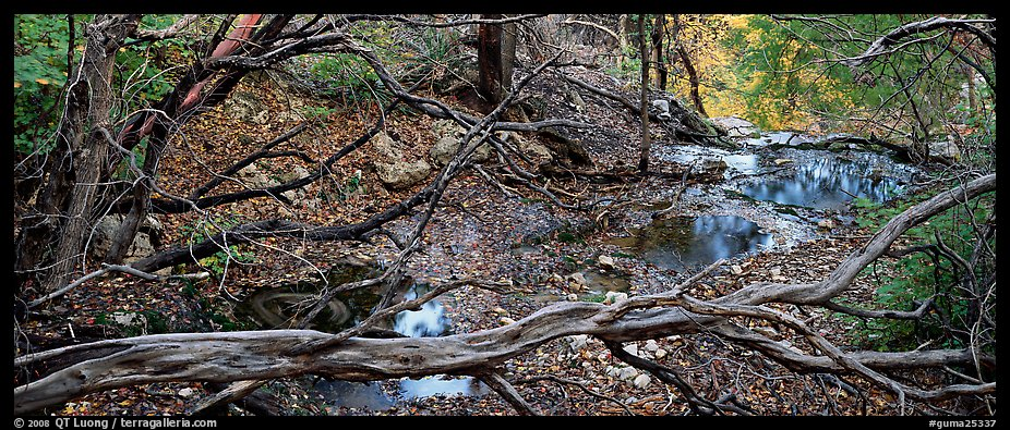 Branches and creek in the fall. Guadalupe Mountains National Park (color)