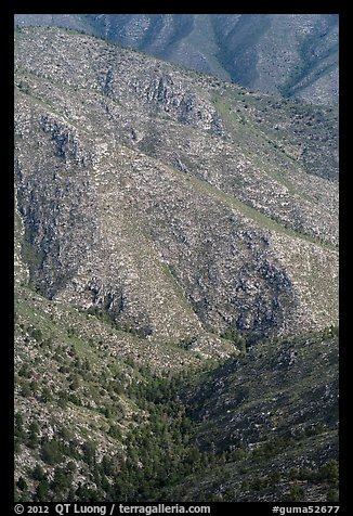Forested ridges above Pine Spring Canyon. Guadalupe Mountains National Park (color)