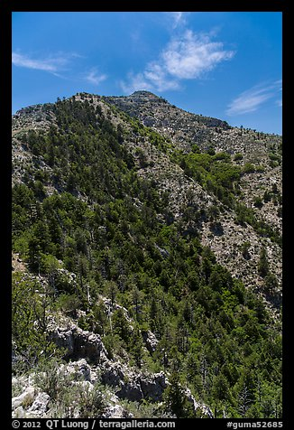 Guadalupe Peak and forested slopes. Guadalupe Mountains National Park (color)