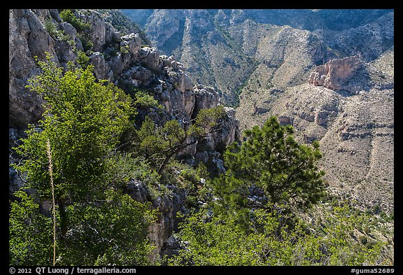 Trees and limestone cliffs. Guadalupe Mountains National Park (color)