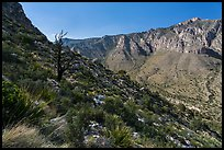 Slopes with shrubs and Hunter Peak. Guadalupe Mountains National Park ( color)