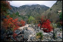 Pine Spring Canyon in fall. Guadalupe Mountains National Park, Texas, USA.
