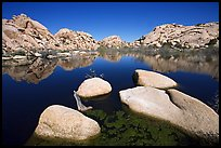 Barker Dam reservoir, mid-day. Joshua Tree National Park, California, USA. (color)