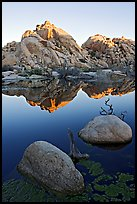 Rockpile and refections, Barker Dam, sunrise. Joshua Tree National Park, California, USA. (color)