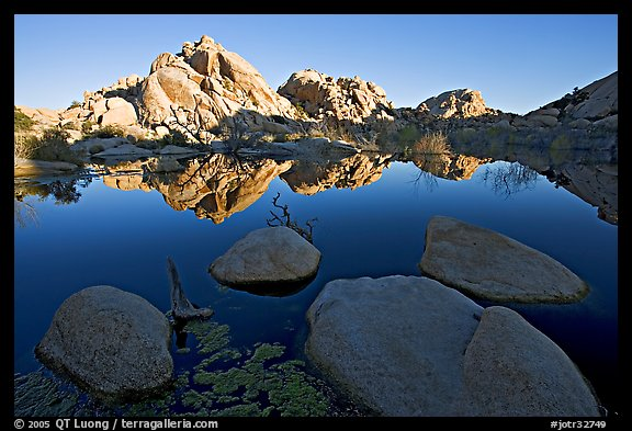 Rockpiles reflected in pond, Barker Dam, sunrise. Joshua Tree National Park (color)