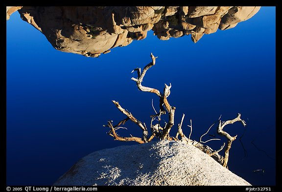 Reflection, rock, and branches. Joshua Tree National Park (color)