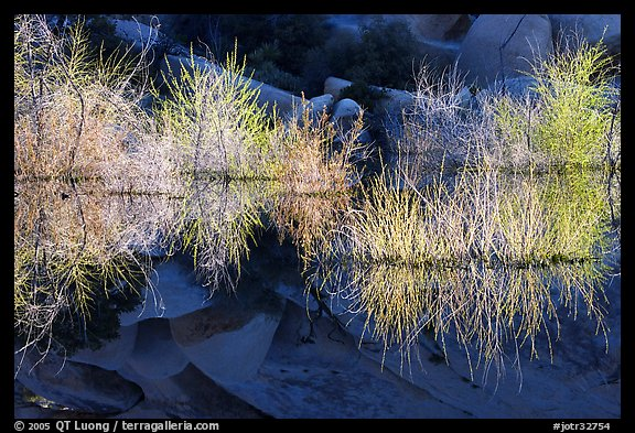 Willows, rocks, and reflections, Barker Dam, early morning. Joshua Tree National Park (color)