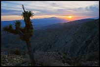 Yucca at sunset, Keys View. Joshua Tree National Park ( color)