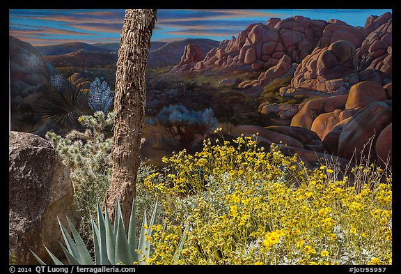 Flowers and mural. Joshua Tree National Park (color)