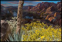 Flowers and mural. Joshua Tree National Park ( color)