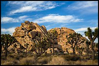 Joshua trees and piled-up boulders, late afternoon. Joshua Tree National Park ( color)