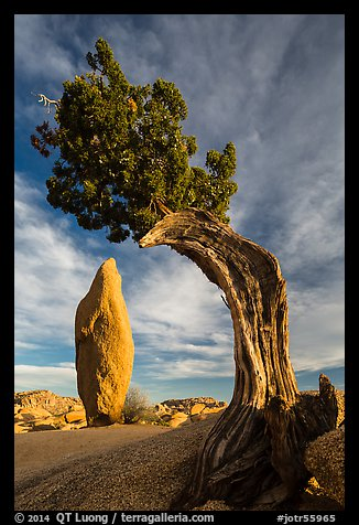 Balanced rock and leaning juniper, Jumbo Rocks. Joshua Tree National Park (color)