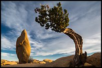 Leaning juniper and pointed monolith. Joshua Tree National Park ( color)