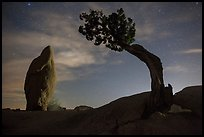 Juniper and balanced pointed rock at night. Joshua Tree National Park ( color)