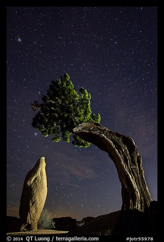 Pointed monolith framed by juniper tree at night. Joshua Tree National Park (color)