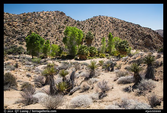 Cottonwood Spring and bare hills. Joshua Tree National Park (color)
