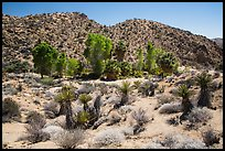 Cottonwood Spring and bare hills. Joshua Tree National Park ( color)