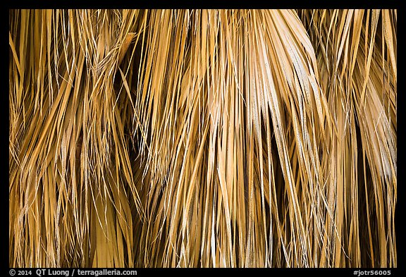 Close-up of dried palm leaves. Joshua Tree National Park (color)