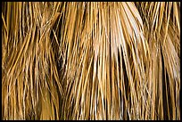 Close-up of dried palm leaves. Joshua Tree National Park ( color)