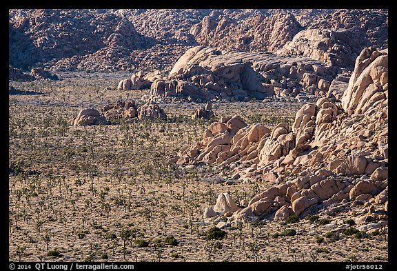 Boulders outcrops and Joshua Trees from above. Joshua Tree National Park (color)