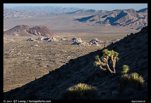 Cactus, slope in shade, and desert mountains. Joshua Tree National Park (color)