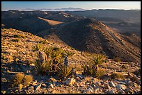 View towards San Bernardino Mountains from Ryan Mountain. Joshua Tree National Park ( color)