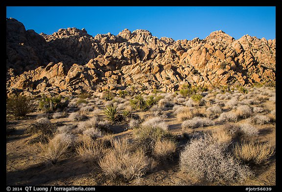 Towering Wonderland of Rocks rising above Indian Cove. Joshua Tree National Park (color)