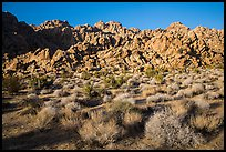 Towering Wonderland of Rocks rising above Indian Cove. Joshua Tree National Park ( color)