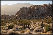 Boulder outcrop and ridge, Indian Cove. Joshua Tree National Park ( color)