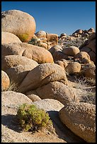 Sage and boulders, White Tanks. Joshua Tree National Park ( color)