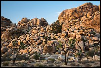 Joshua trees and tall rock outcrops. Joshua Tree National Park ( color)