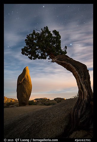 Boulder and juniper at night with moonset glow. Joshua Tree National Park (color)
