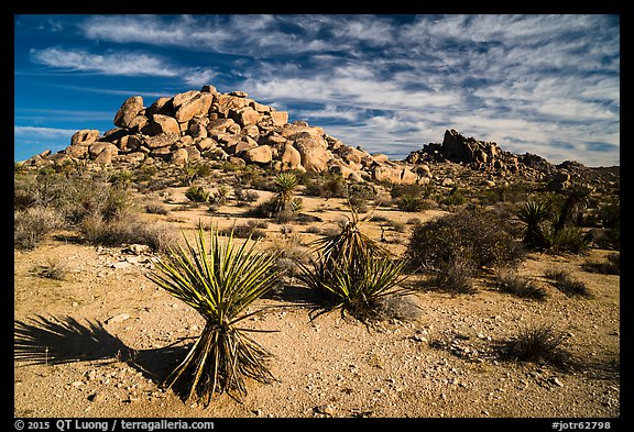 Yuccas and boulder outcrops,. Joshua Tree National Park (color)