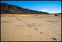 Playa with animal track, Pleasant Valley. Joshua Tree National Park ( color)