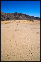 Parallel animal tracks on Pleasant Valley playa. Joshua Tree National Park ( color)