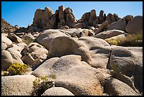Flowers and boulders near Squaw Tank. Joshua Tree National Park ( color)