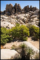 Vegetation in Squaw Tank. Joshua Tree National Park ( color)