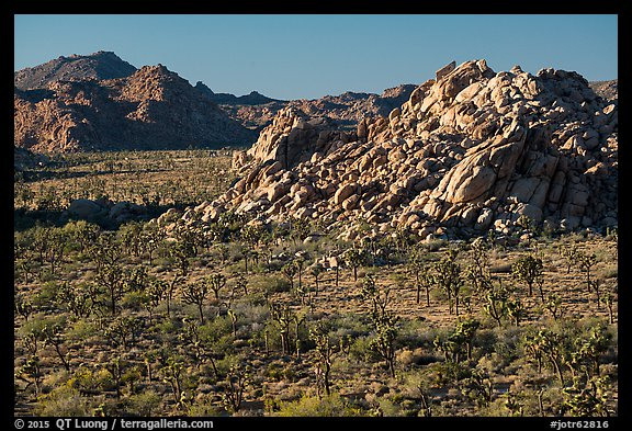 Joshua trees and rock outcrops from above. Joshua Tree National Park (color)