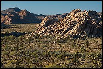 Joshua trees and rock outcrops from above. Joshua Tree National Park ( color)