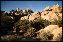 Hidden Valley at night. Joshua Tree National Park ( color)