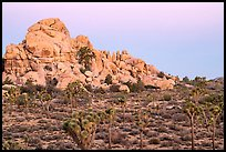 Joshua Trees, boulder outcrop, Belt of Venus. Joshua Tree National Park ( color)