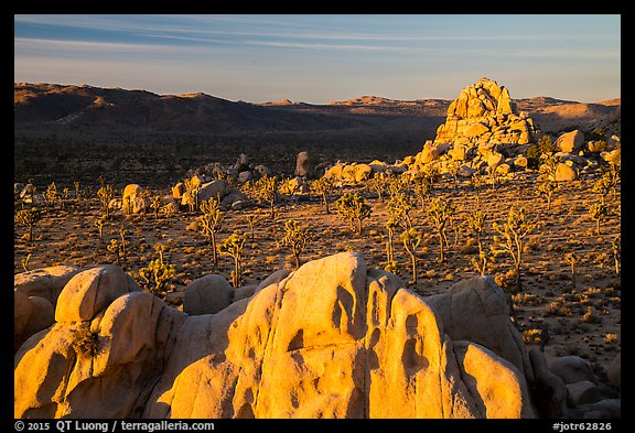 Joshua Trees and rocks at sunrise. Joshua Tree National Park (color)