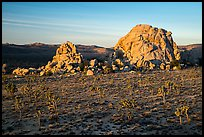 Joshua Trees and large rock formations at sunrise. Joshua Tree National Park ( color)