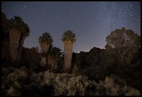 Cottonwood Spring Oasis at night. Joshua Tree National Park ( color)