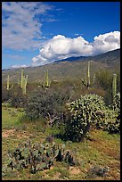 Grassy area near Mica View, Rincon Mountain District. Saguaro National Park ( color)