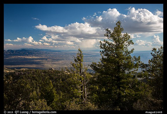 Pine trees and afternoon clouds from Rincon Peak. Saguaro National Park (color)