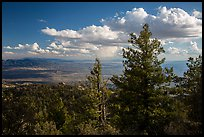 Pine trees and afternoon clouds from Rincon Peak. Saguaro National Park ( color)