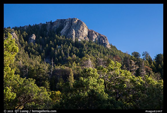 Rincon Peak rising above pine forests. Saguaro National Park (color)