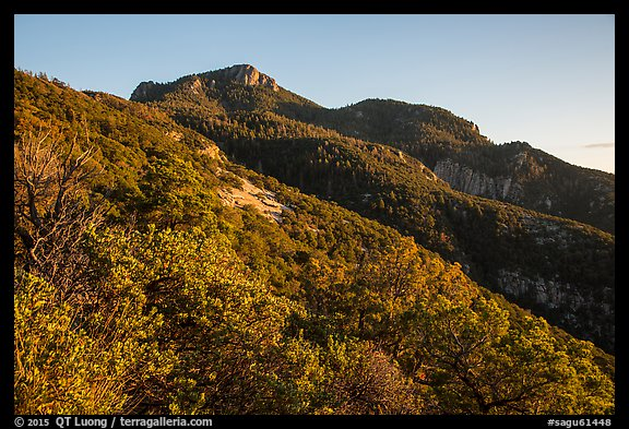 Rincon Peak at sunset. Saguaro National Park (color)