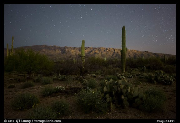 Cactus, Rincon Mountains, and star field at night. Saguaro National Park (color)